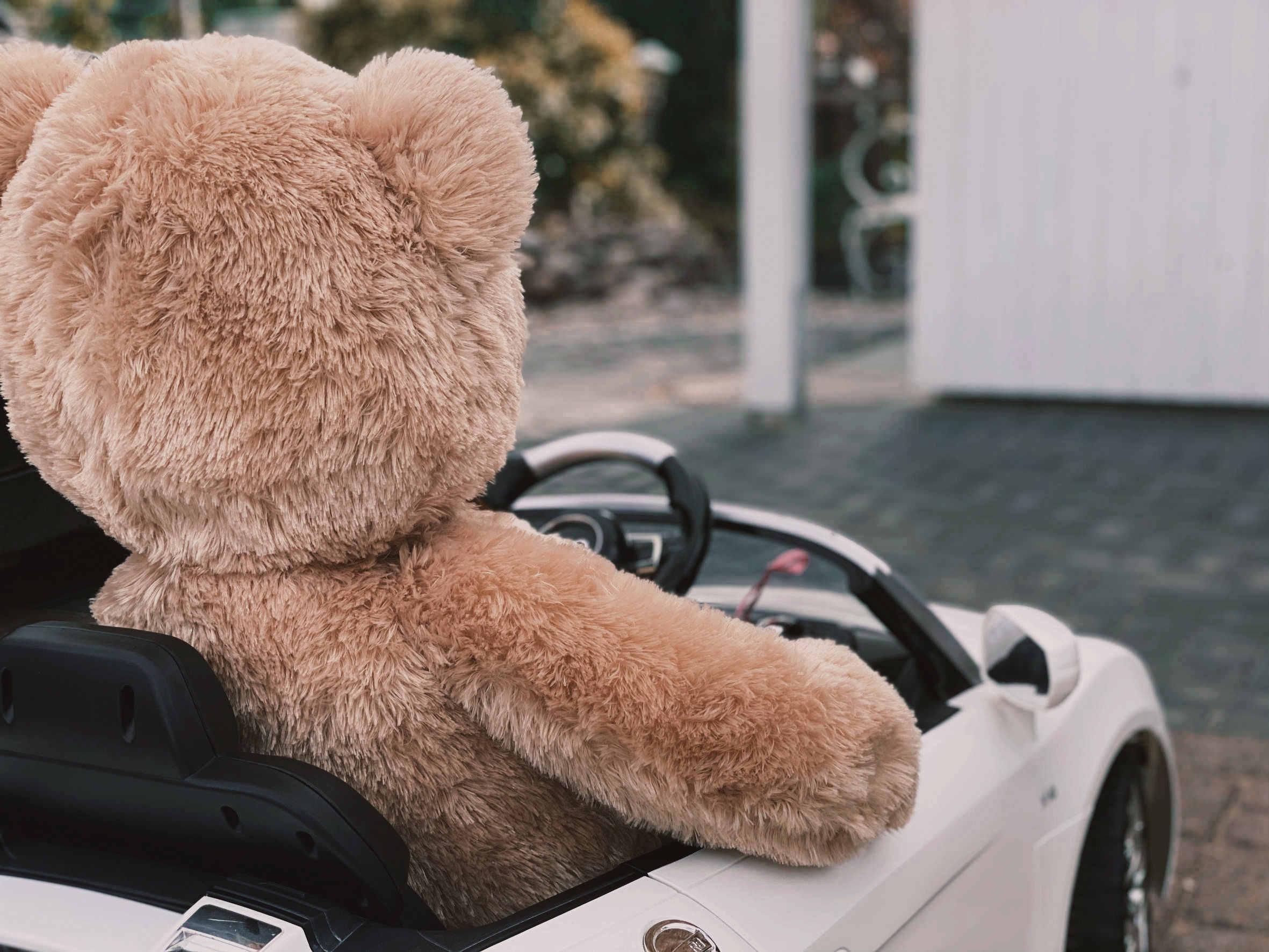 Plüsch Teddy im Spielauto von hinten
