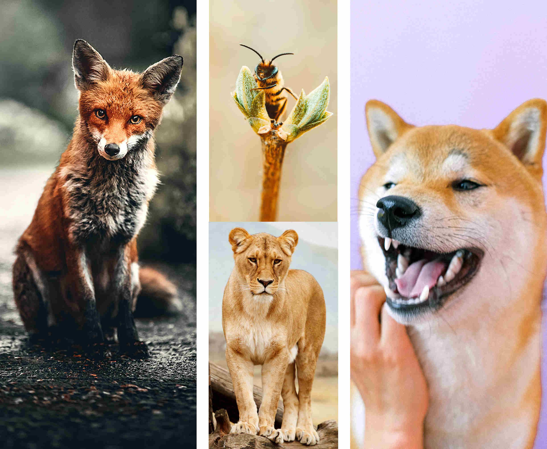Fuchs, Biene, Löwe, Hund - Charaktereigenschaften
